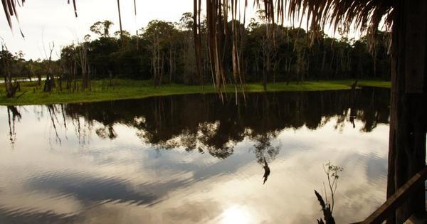 Manaus - Am Nachmittag das Leben auf dem Fluss und die Begegnung mit den Affen. Am nächsten Tag geht es in Richtung Heimat. SCHADE!!!!