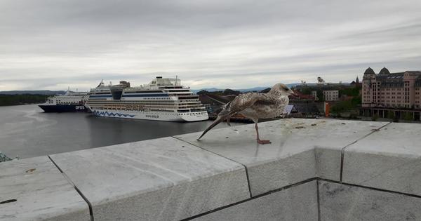 """Mutti: """"Heute erkunden wir Oslo noch bei Tageslicht für dich und endlich werden wir über den weißen Marmor laufen!"""""""