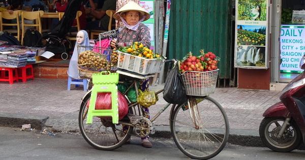 """""""Südostasien"""" 2019 (Teil 12) / Vietnam 2 // weitere Kuriositäten und ein widerliches braunes Felltier...// Der etwas andere Reisebericht..., Fakten, Interessantes und Kurioses // - dies sind die Reiseerlebnisse des Teddy Kaufhof..."""