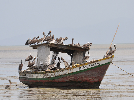 Fischerboot am Siewdass Sadhu Hindu Tempel, Waterloo, Trinidad & Tobago