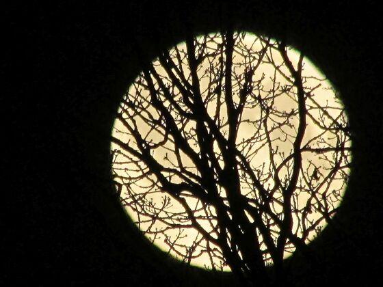 """La Luna"" als ""Scherenschnitt-Motiv"""