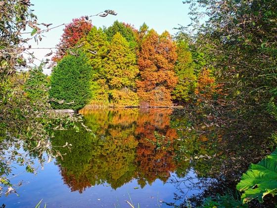 21.10.2012 Herbst im botanischen Garten Klein Flottbek