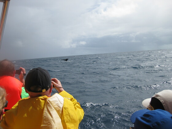 Karibische Momente - Samana Whalewatching - Ausflug SMN07