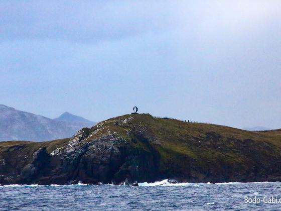 Albatros am Kap Hoorn