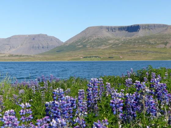 Island - die Westfjorde