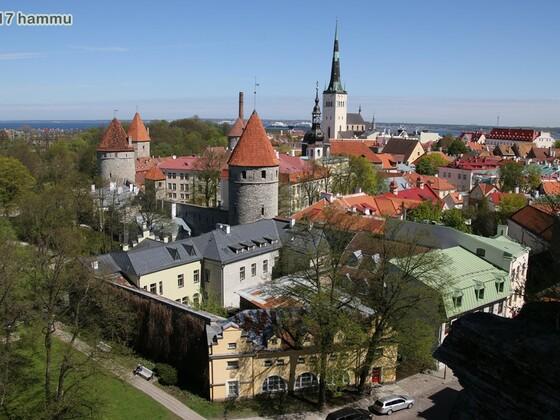 AIDAmar - Ostsee 20.05.-27.05.17 - 07 Tallinn