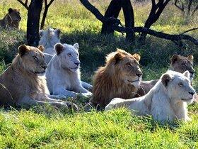 Natal Lion Park, Durban