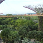 Supertrees - Gardens by the Bay, Singapur