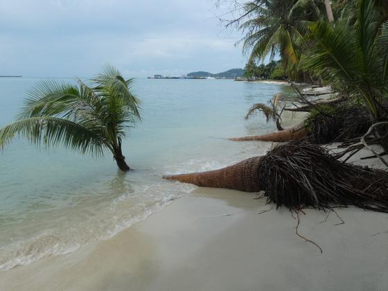 Coconut Beach Ko Samui, Naton