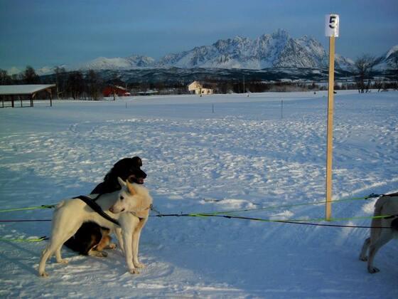 Huskyschlittenfahrt Winter im hohen Norden 2018