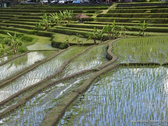 Bali, Reisfelder