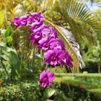 Ochideen
