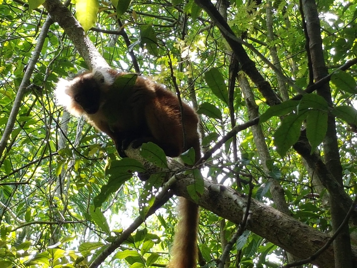 Im Dschungel von Madagaskar