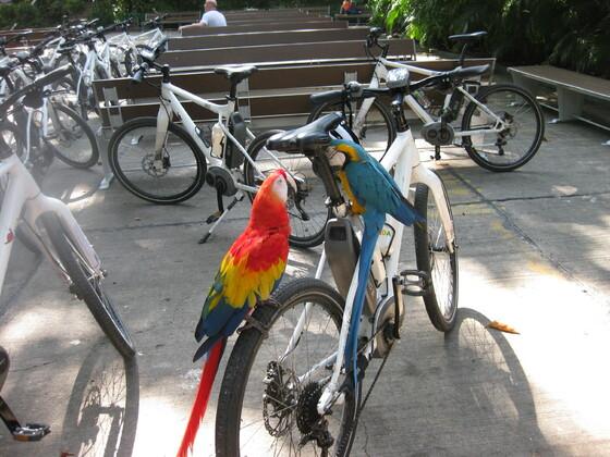 Karibische Momente - Cartagena Bike Tour mit Anhang