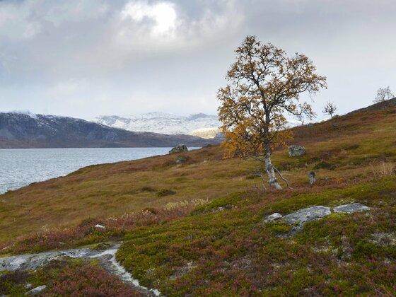 Aida Sol Reise  17.bis 27.09.2018 Norwegen