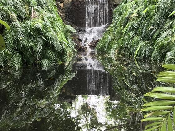 Darwin, Botanischer Garten