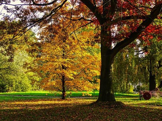 Herbst bei uns um die Ecke