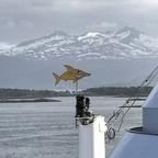 Haifisch in Molde :)