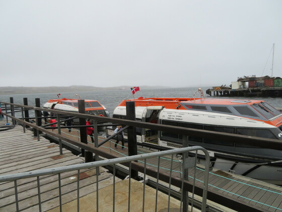 Norwegian Sun - Tendern Falklandinsel