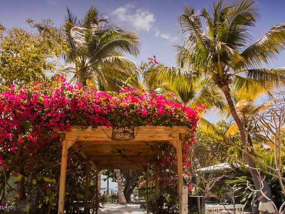 """AIDAvita, Ausflug zur Insel """"jost van dyke"""" - british virgin islands - noch bevor Irma und Maria die Palmen und die Soggy Dollar Bar verwüstete"""