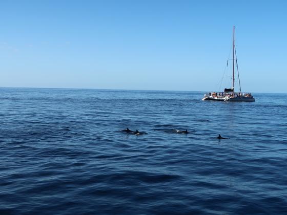 Wale und Delphine vom Katamaran aus vor Teneriffa am 20.12.2017