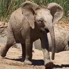 Gleich hebt er ab. Addo Elephant Park
