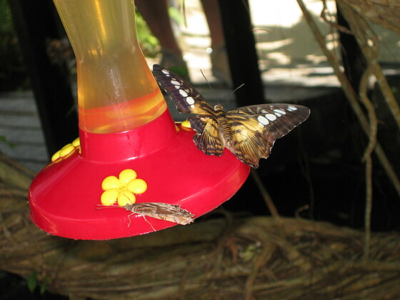 Karibische Momente - St. Maarten - Schmetterlingsfarm